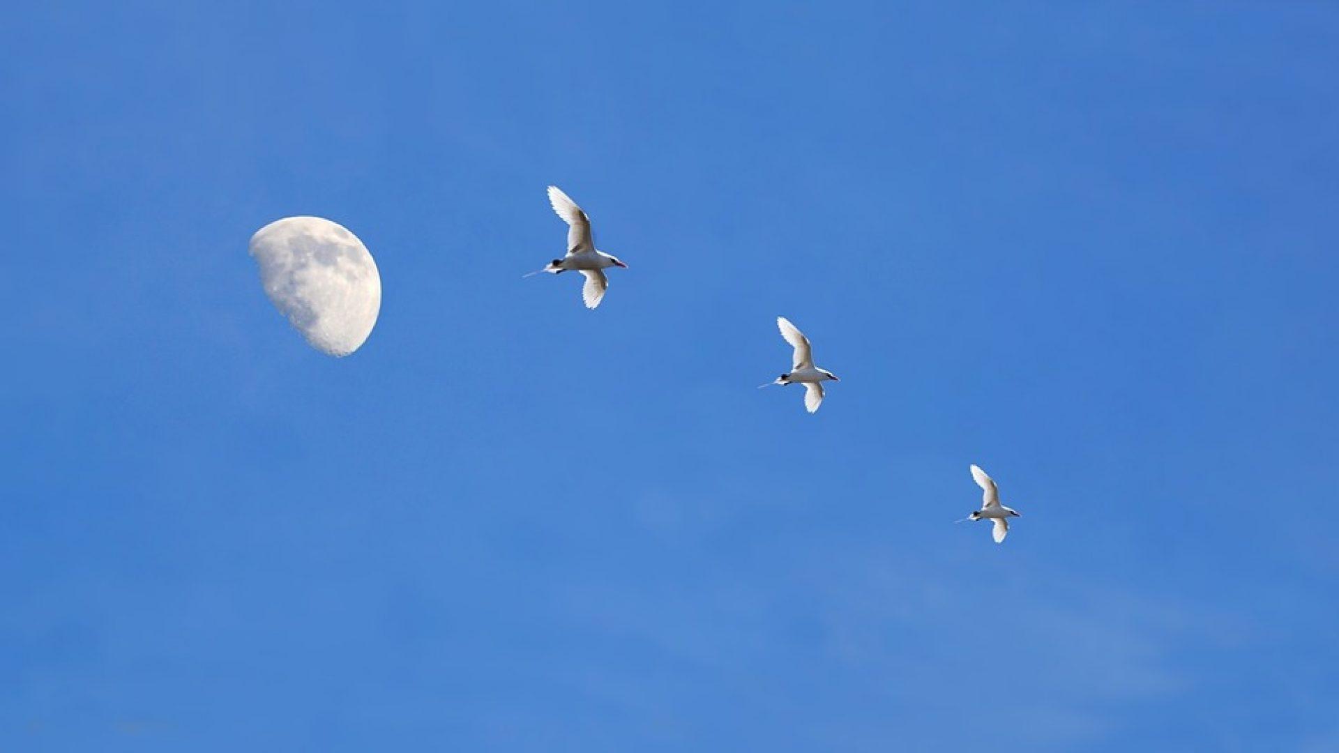 anief abruzzo contatti sky - photo#43